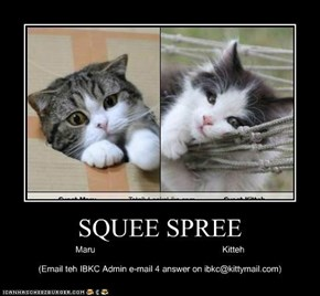 SQUEE SPREE
