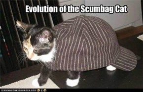 Evolution of the Scumbag Cat