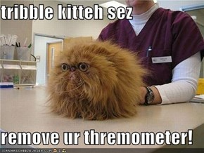 tribble kitteh sez  remove ur thremometer!
