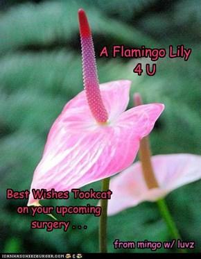 A Flamingo Lily 4 U