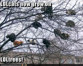 LOLcats now grow on   LOLtrees!
