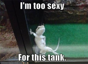 I'm too sexy  For this tank.