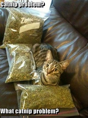 Catnip problem?  What catnip problem?