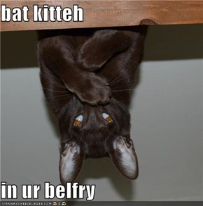 bat kitteh  in ur belfry