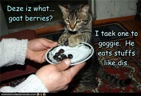 Deze iz what...goat berries?