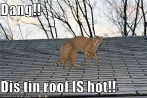 Dang!!  Dis tin roof IS hot!!
