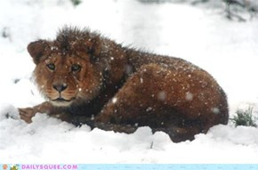 Snow Lion IRL