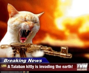 Breaking News - A Talaban kitty is invading the earth!