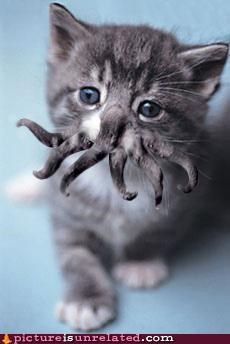 Cthulhu Kitty!