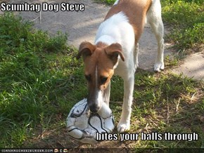 Scumbag Dog Steve  bites your balls through