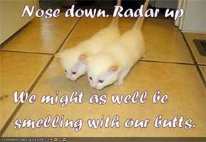 Kitties face reality...