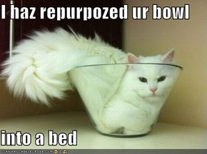 I haz repurpozed ur bowl  into a bed