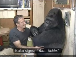 Around the Interwebs: Robin Williams Has Life-Changing Encounter With Koko the Gorilla