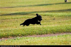 Cyoot Puppeh ob teh Day: Leaps and Bounds
