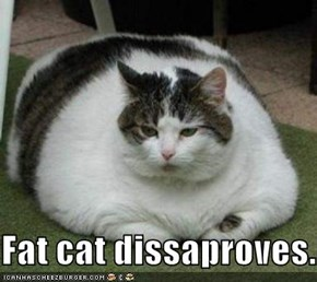 Fat cat dissaproves.
