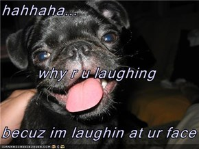 hahhaha... why r u laughing becuz im laughin at ur face