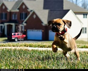Cyoot Puppeh ob teh Day: Here I Come to Save The Day!