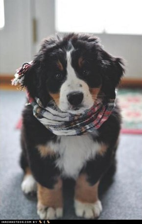 Cyoot Puppeh ob teh Day: Scruffy Scarf