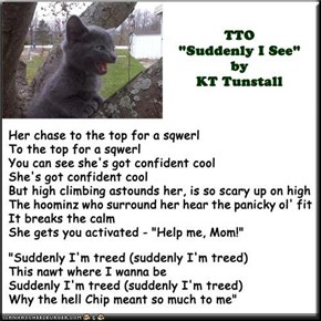 """Suddenly I'm Treed"" (TTO ""Suddenly I See"" by KT Tunstall)"