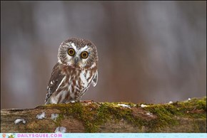 Acting Like Animals: Well Owl Be Darned...