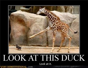 LOOK A THIS DUCK