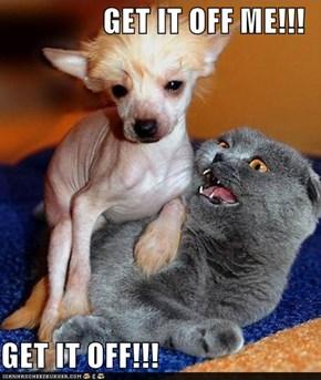 GET IT OFF ME!!!  GET IT OFF!!!