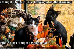 i thought u told me it was halloween, not thanksgiving!  ...that's why i brought basement cat