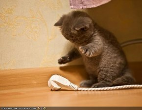 Cyoot Kitteh of teh Day: Heerz Ur Problem... Ur Estenshun Kord Iz Unplugged!
