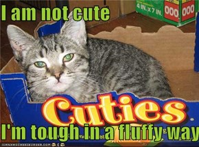 I am not cute  I'm tough in a fluffy way
