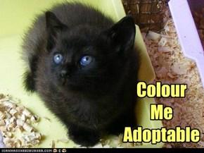 Black Cat Friday 2011