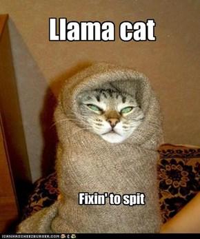 Llama cat