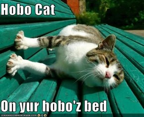 Hobo Cat  On yur hobo'z bed