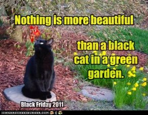 Nothing is more beautiful than a black cat in a green garden.