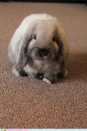Smug as a Bun on a Rug