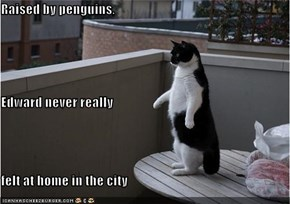 Raised by penguins, Edward never really  felt at home in the city