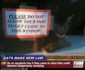 CATS MAKE NEW LAW - Its an apropiate law if they came to close they could become dangerously annoying