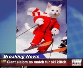 Breaking News - Giant slalom no match fur ski kitteh
