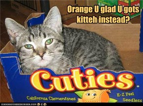 Orange U glad U gots kitteh instead?