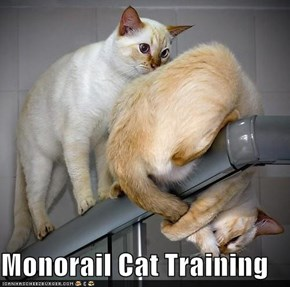 Monorail Cat Training