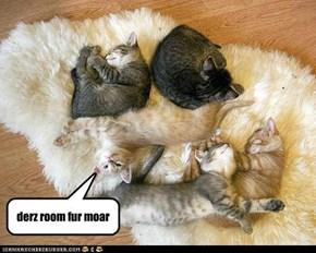 community rug siesta