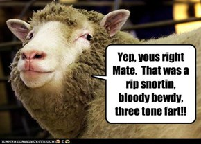 Aussie sheep tell it like it is!