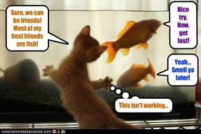 Kitteh mastermind ob teh fish(-ing) tank