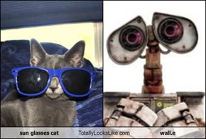 sun glasses cat Totally Looks Like wall.e
