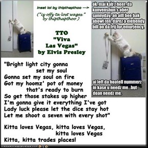 """Travelin' Kitteh"" (TTO ""Viva Las Vegas"" by Elvis Presley)"