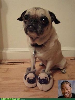 A Pug In A Pug ....