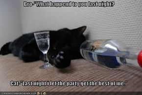 "Bro-""What happend to you last night?  Cat-""Last night i let the party get the best of me."""