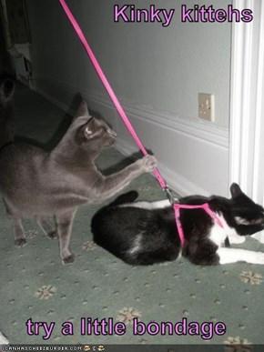 Kinky kittehs  try a little bondage