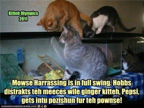 Kitteh Olympics 2011 Mowse Harrassing