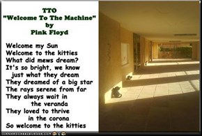 """Welcome To The Kitties"" (TTO ""Welcome To The Machine"" by Pink Floyd)"
