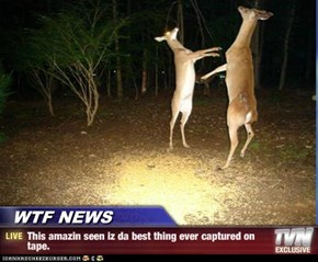 WTF NEWS - This amazin seen iz da best thing ever captured on tape.